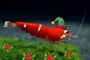 SCR Santashrimp